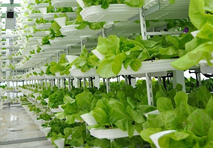 Vertical Farm growth